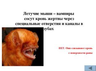 НЕТ. Они слизывают кровь с поверхности раны Летучие мыши – вампиры сосут кро