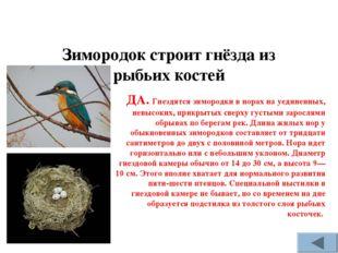 Зимородок строит гнёзда из рыбьих костей ДА. Гнездятся зимородки в норах на у