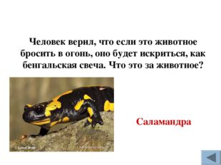 Человек верил, что если это животное бросить в огонь, оно будет искриться, ка