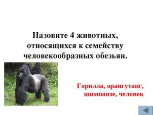 Горилла, орангутанг, шимпанзе, человек Назовите 4 животных, относящихся к сем