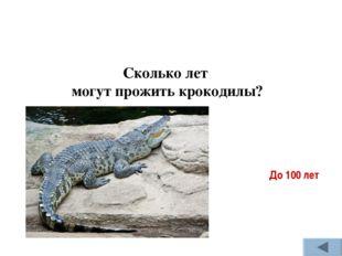 Сколько лет могут прожить крокодилы? До 100 лет