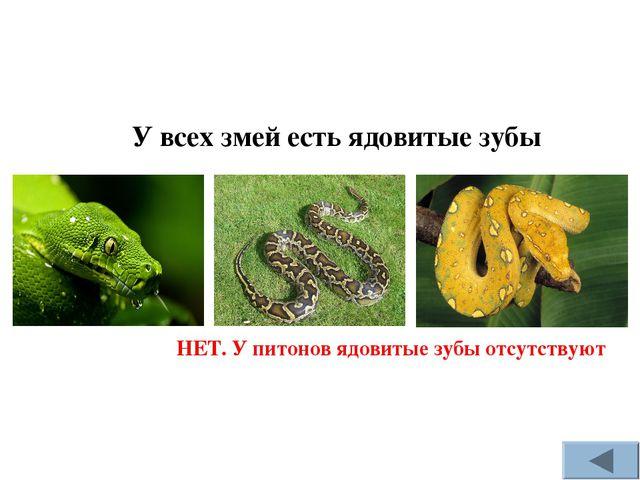 У всех змей есть ядовитые зубы НЕТ. У питонов ядовитые зубы отсутствуют