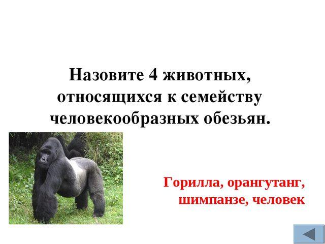 Горилла, орангутанг, шимпанзе, человек Назовите 4 животных, относящихся к сем...