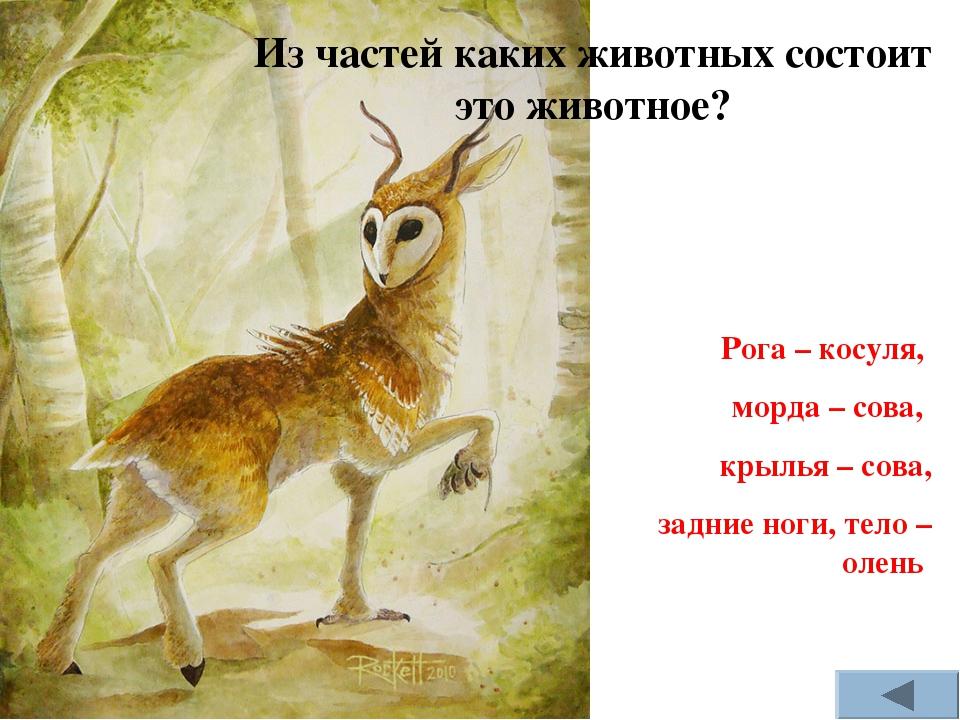 Из частей каких животных состоит это животное? Рога – косуля, морда – сова, к...