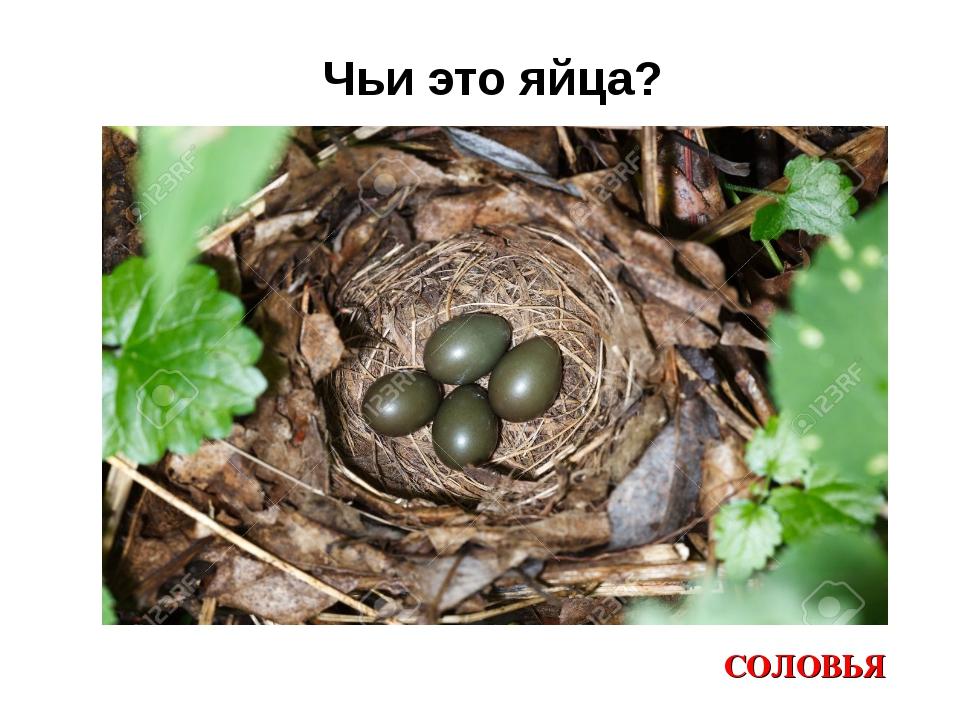 Чьи это яйца? СОЛОВЬЯ