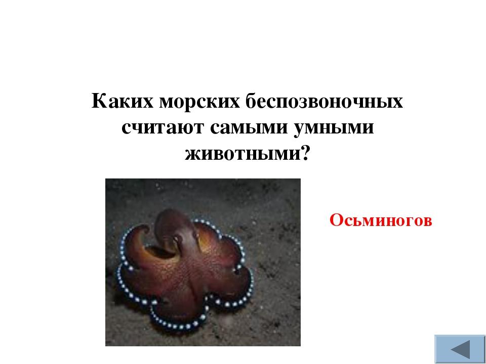 Каких морских беспозвоночных считают самыми умными животными? Осьминогов