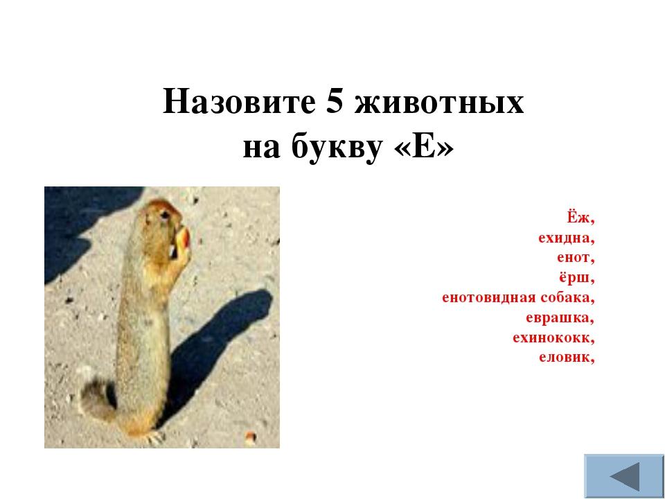 Назовите 5 животных на букву «Е» Ёж, ехидна, енот, ёрш, енотовидная собака, е...