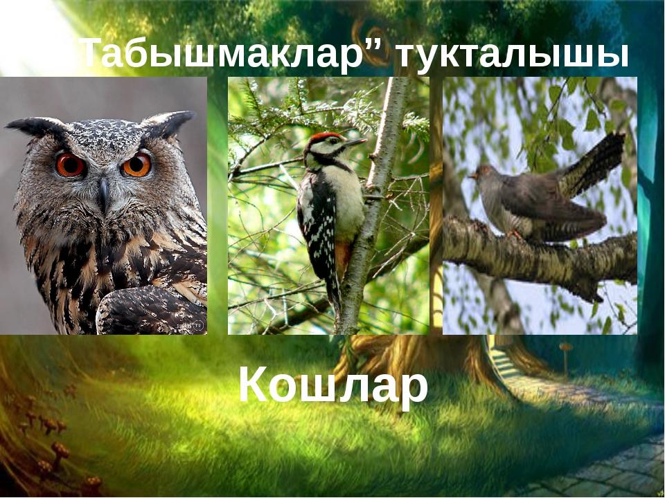 """""""Табышмаклар"""" тукталышы Кошлар"""