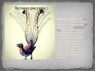 Лирохвосты, или птицы-лиры (лат.Menuridae)— семейство птиц отряда воробьин