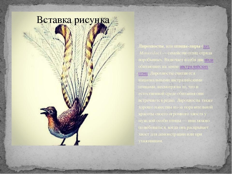 Лирохвосты, или птицы-лиры (лат.Menuridae)— семейство птиц отряда воробьин...