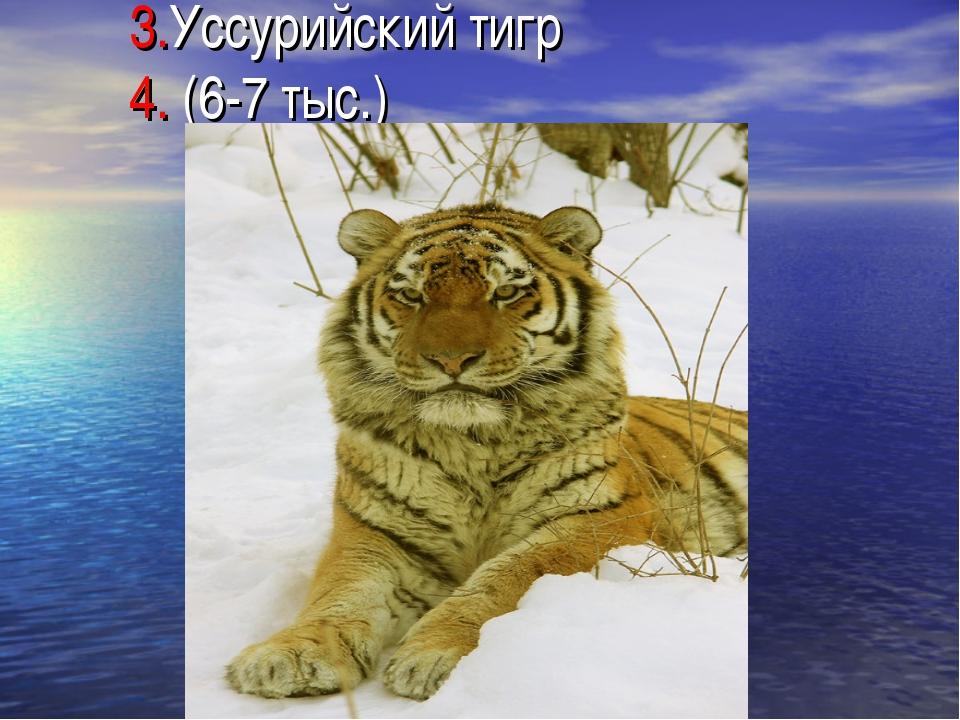 3.Уссурийский тигр 4. (6-7 тыс.)