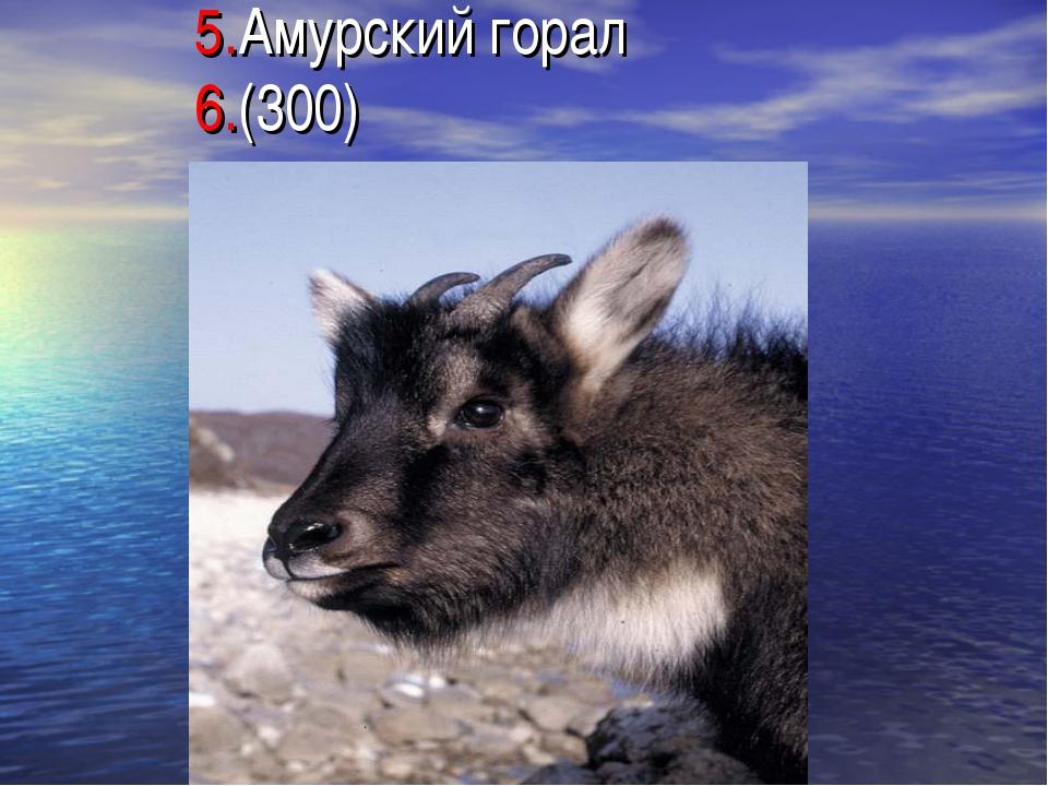 5.Амурский горал 6.(300)