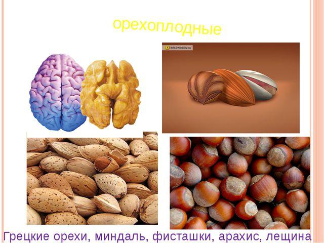 орехоплодные Грецкие орехи, миндаль, фисташки, арахис, лещина