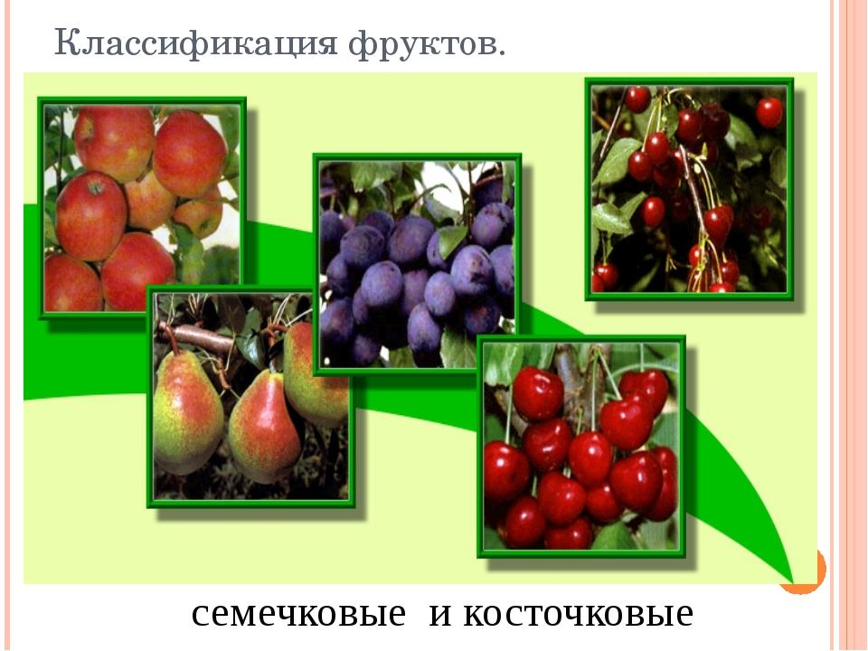семечковые и косточковые Классификация фруктов.