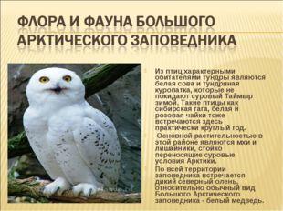 Из птиц характерными обитателями тундры являются белая сова и тундряная куроп