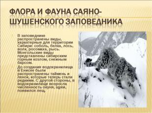 В заповеднике распространены виды, характерные для территории Сибири: соболь,