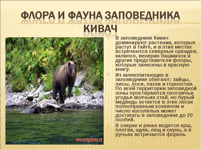 В заповеднике Кивач доминируют растения, которые растут в тайге, и в этих мес...