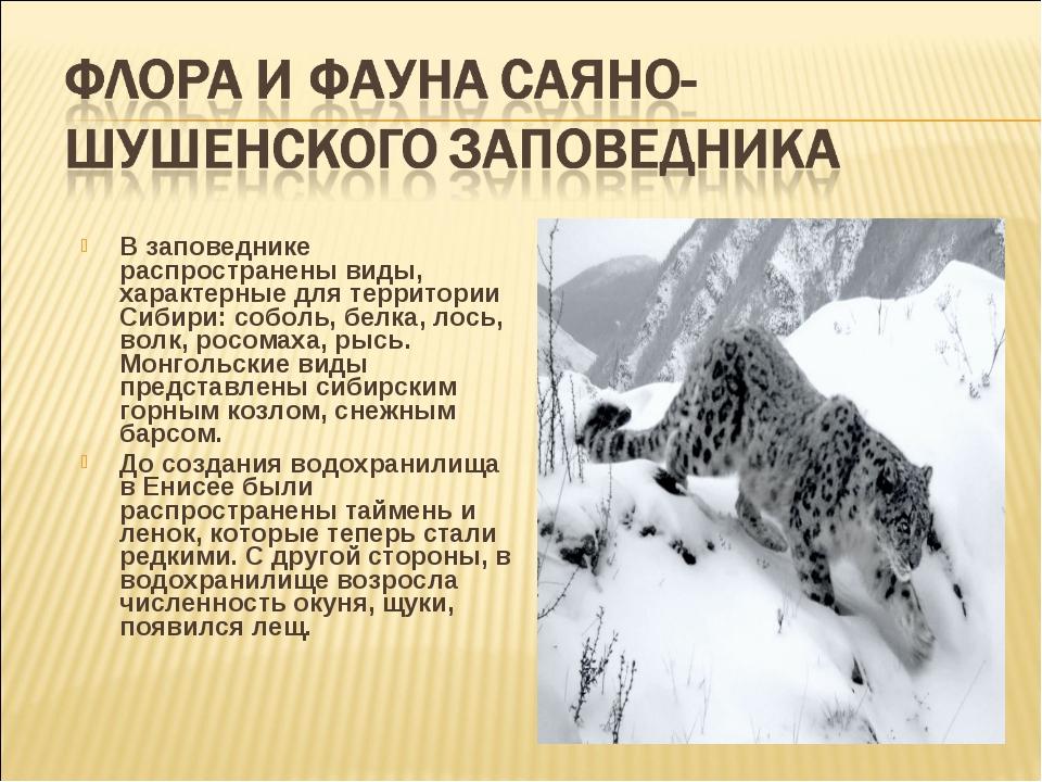 В заповеднике распространены виды, характерные для территории Сибири: соболь,...