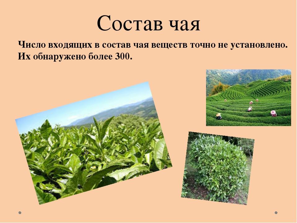 Состав чая Число входящих в состав чая веществ точно не установлено. Их обнар...
