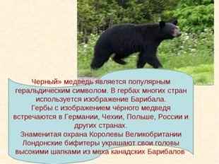 Черный» медведь является популярным геральдическим символом. В гербах многих