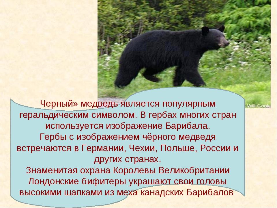 Черный» медведь является популярным геральдическим символом. В гербах многих...