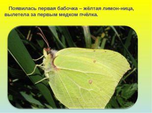 Появилась первая бабочка – жёлтая лимон-ница, вылетела за первым медком пчёл
