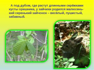 А под дубом, где растут длинными серёжками кусты орешника, у зайчихи родился