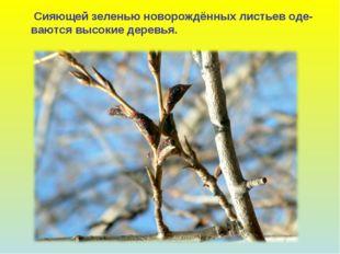 Сияющей зеленью новорождённых листьев оде- ваются высокие деревья.