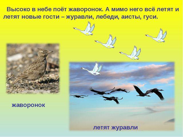 Высоко в небе поёт жаворонок. А мимо него всё летят и летят новые гости – жу...