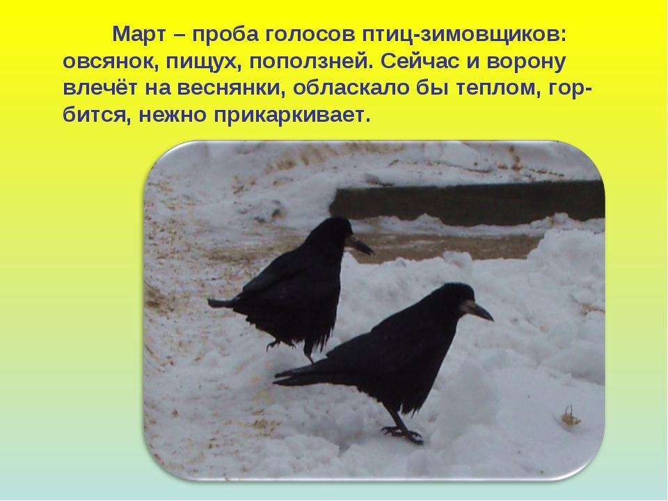 Март – проба голосов птиц-зимовщиков: овсянок, пищух, поползней. Сейчас и во...