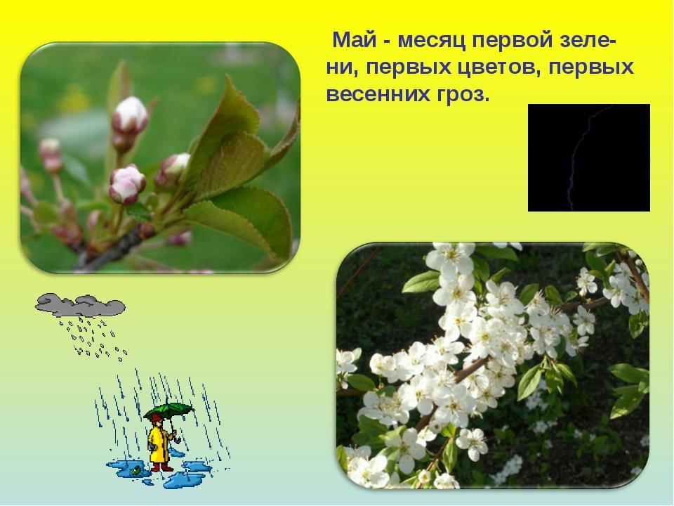 Май - месяц первой зеле- ни, первых цветов, первых весенних гроз.