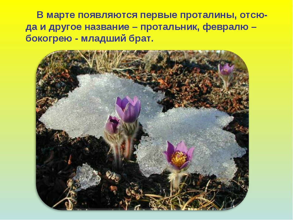 В марте появляются первые проталины, отсю- да и другое название – протальник...