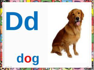 * * Dd dog