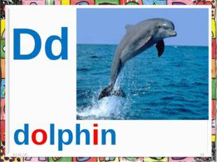 * * Dd dolphin