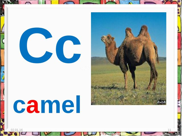 * * Cc camel