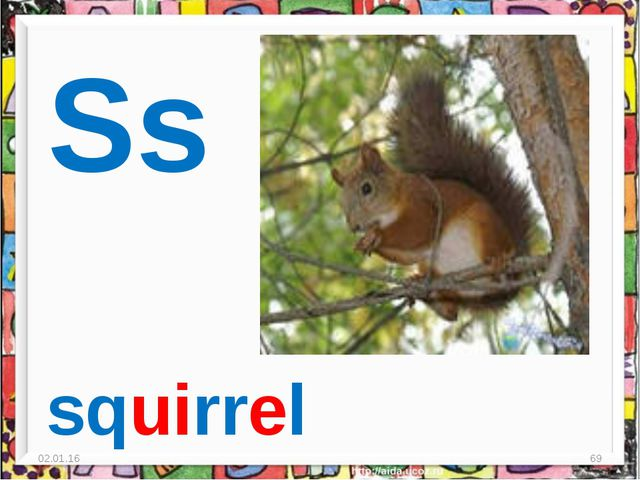 * * Ss squirrel
