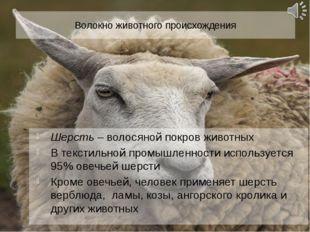 Волокно животного происхождения Шерсть – волосяной покров животных В текстиль