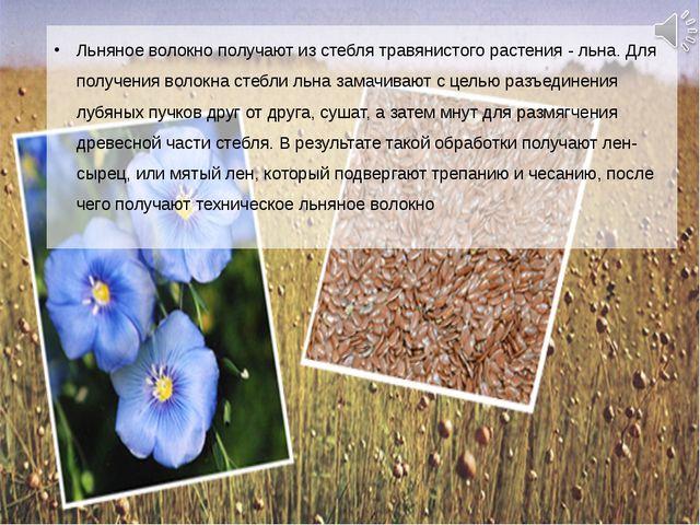 Льняное волокно получают из стебля травянистого растения - льна. Для получени...