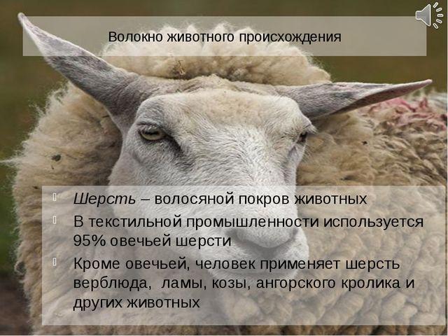 Волокно животного происхождения Шерсть – волосяной покров животных В текстиль...