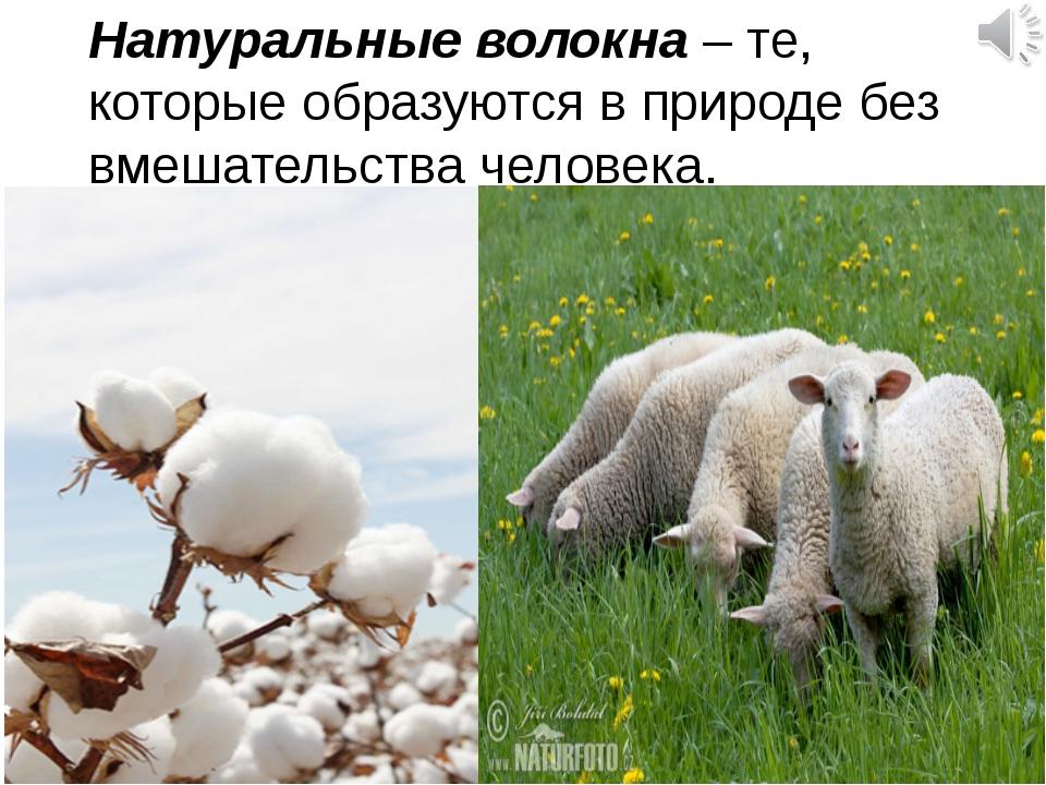 Натуральные волокна – те, которые образуются в природе без вмешательства чело...