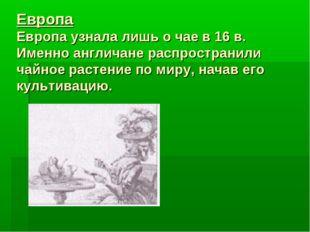 Европа Европа узнала лишь о чае в 16 в. Именно англичане распространили чайно