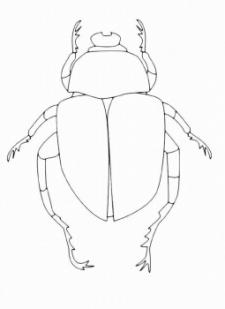 C:\Анюта\новый класс уч.годы 2011-2015\окр.мир\насекомые\картинки\zhuk17_auto_700.jpg