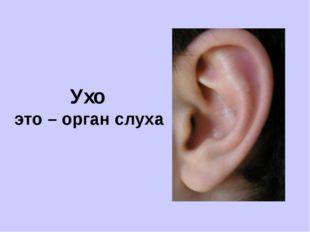 Ухо это – орган слуха