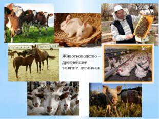 Животноводство – древнейшее занятие луганчан.