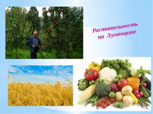 Растительность на Луганщине
