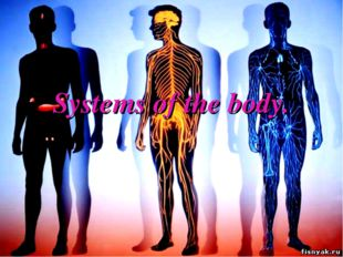 Systems of the body.