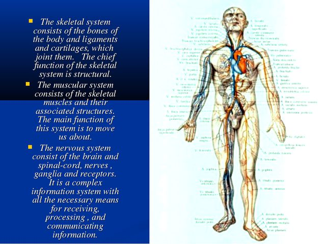 The skeletal system consists of the bones of the body and ligaments and carti...