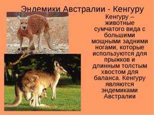 Эндемики Австралии - Кенгуру Кенгуру – животные сумчатого вида с большими мощ