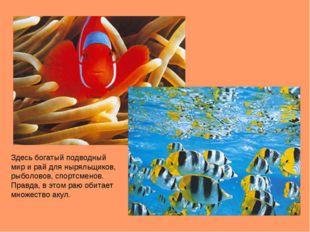 Здесь богатый подводный мир и рай для ныряльщиков, рыболовов, спортсменов. Пр