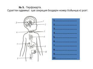 № 5. Перфокарта. Суреттен адамның ішкі секреция бездерін номер бойынша көрсе